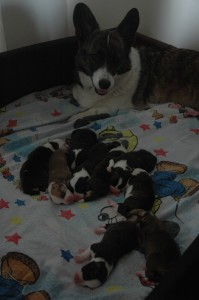 Me and my puppies
